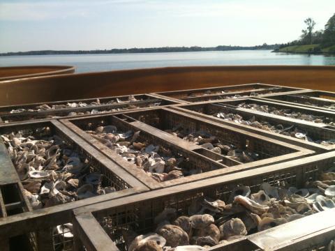 Horn Point oyster pier