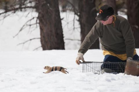 John Hoogland releases a prairie dog. Photo by Elaine Miller Bond