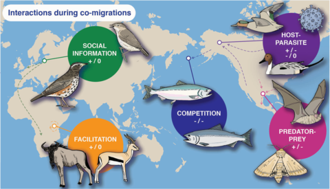 Figure depicting migration interactions