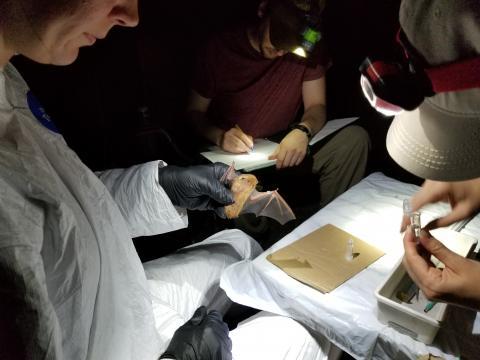Kelly Pearce holds a bat while the team works through their task list.