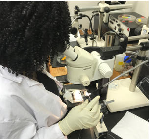 IMET Intern performs micro-injections