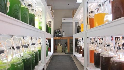 Algae lab with colorful bottles of algae lining the shelves