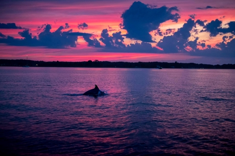 Dolphins in the Bay at sunset