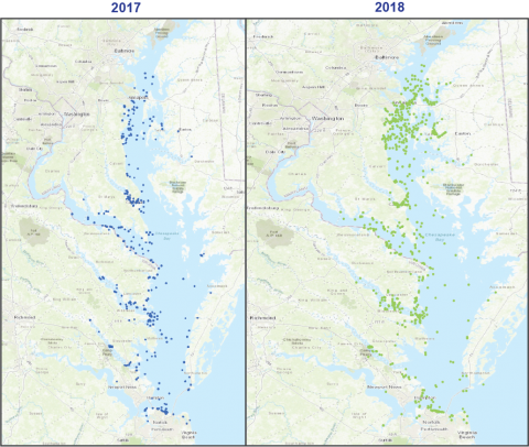 Map of Chesapeake Bay showing 2017-2018 confirmed dolphin sightings.