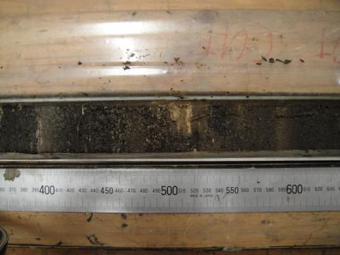 Photo of sediment core containing fossil pollen.