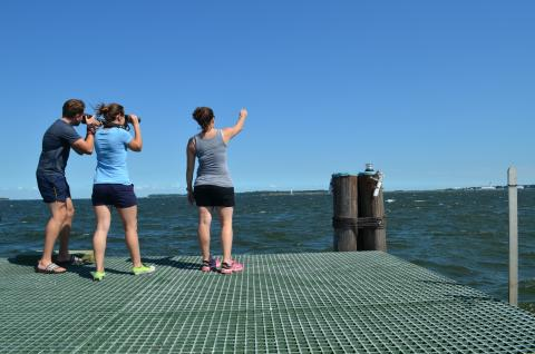 3 DolphinWatch research assistants look out over the Patuxent River from the research pier, searching fol dolphins. with camera and binoculars.