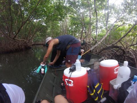 Juan Alvarez pulls samples from a bioluminescent bay in Puerto Rico.