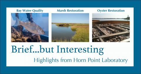 HPL e-newsletter