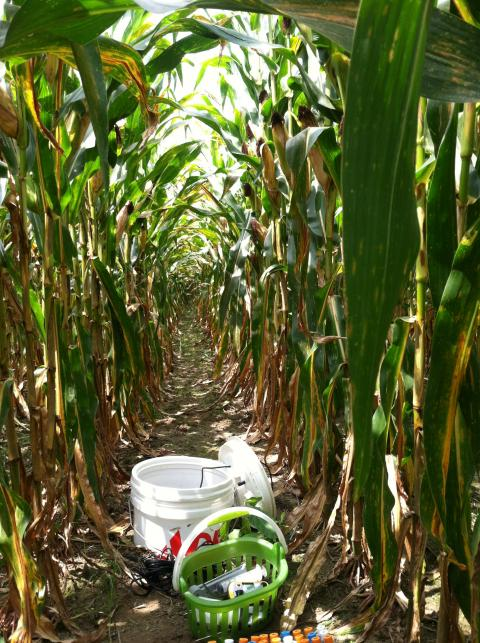 Water quality testing equipment in cornfield