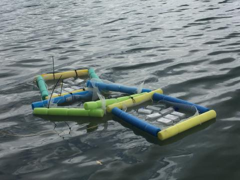 Juan's samples float in the bay before he can retrieve them to study closer.