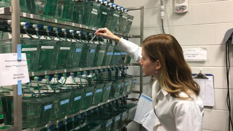 Student Mary Larkin works with zebrafish.