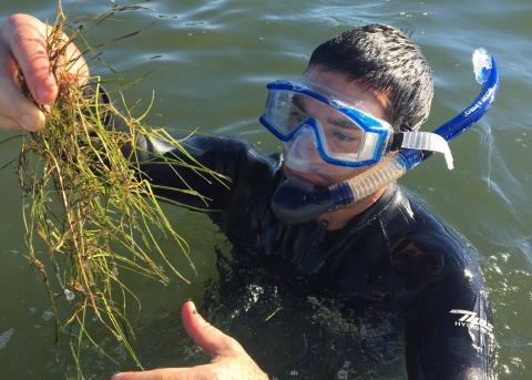 Jeremy Testa, in snorkeling gear, holds up a clump of aquatic grasses