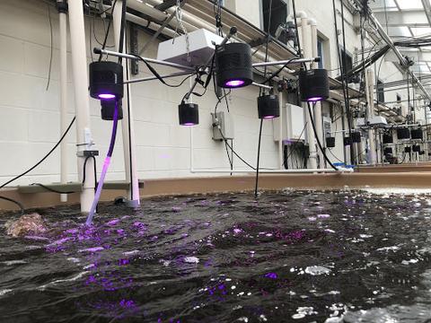 LED lights on Algae Tanks