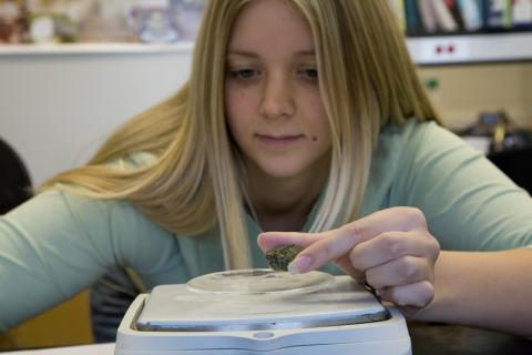 A young student looks at a baby turtle in the lab