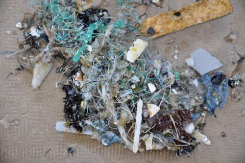 plastic pieces found in the Pacific Ocean