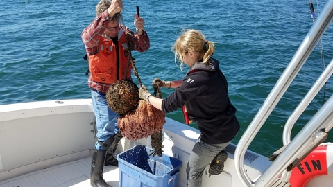 Ellie Rothermel and Dave Secor tending an acoustic receiver. In order to maintain the receiver,  researchers bring it on board to clean it and download detection data..