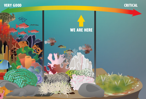 Status of coral reefs IAN graphic