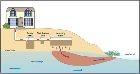 A diagram shows how septic systems can leach into the water.