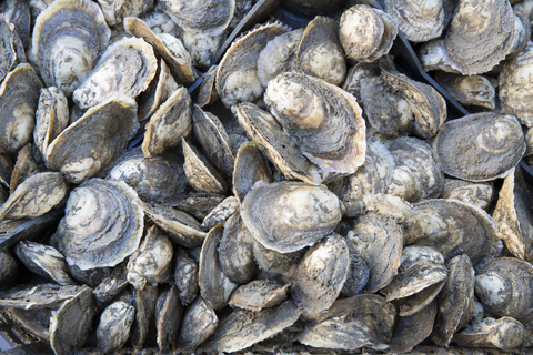 Pile of Oysters