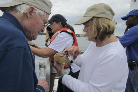 A volunteer examines a crab aboard the Rachel Carson research vessel.