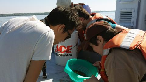 Maureen Brooks and the students in her zooplankton group observe what organisms were in the water they pulled from the river.