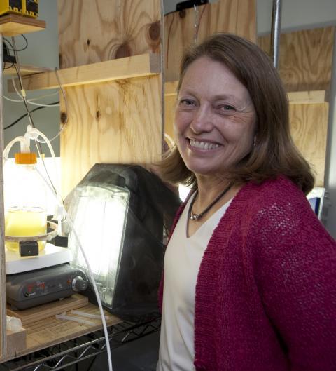 Patricia Glibert