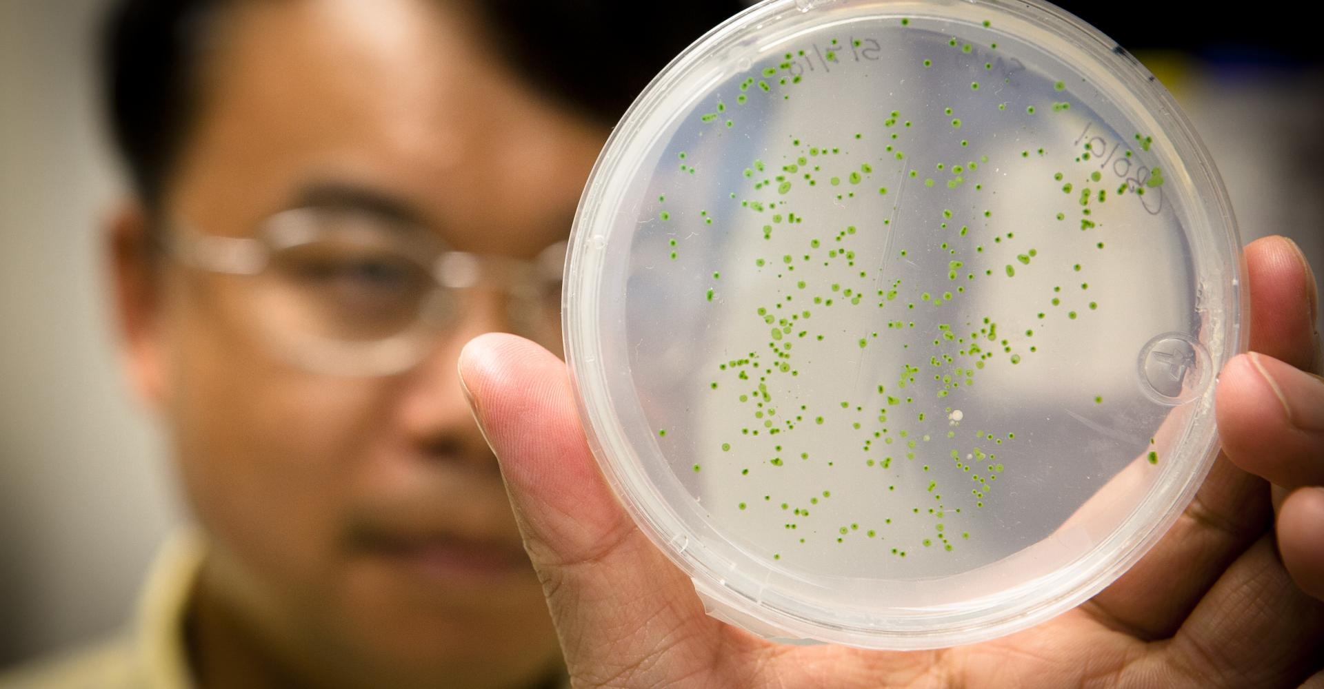 Feng Chen holding up algae culture in petri dish