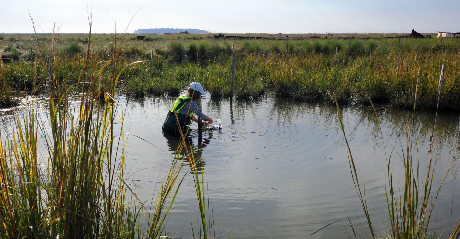 scientist standing in a marsh