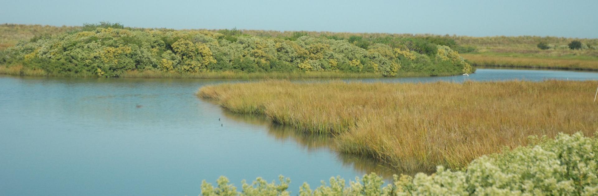 Poplar Island scenery