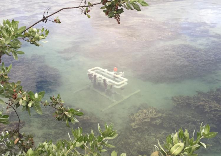 nutrient sensor challenge in Hawaii