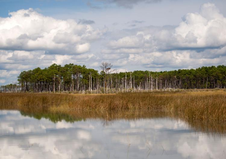 Water meets marsh and land