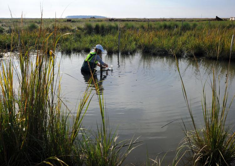 person standing in a marsh