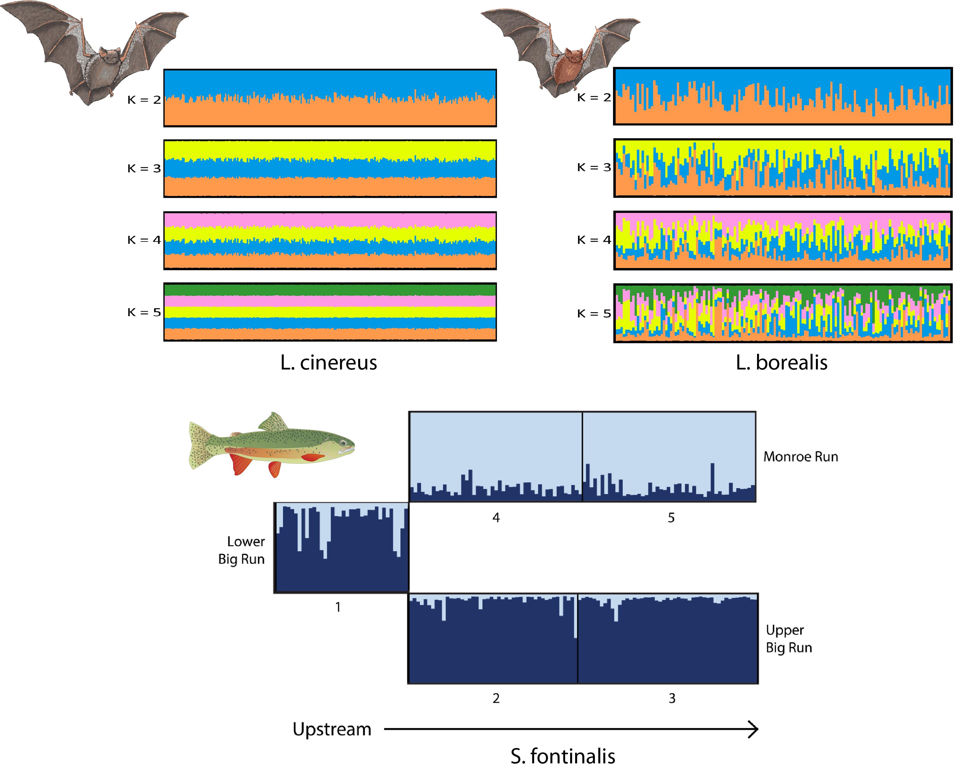 Geographic Origins And Population Genetics Of Bats Killed